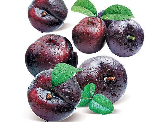 模板更a模板10美食受益让你习惯终生_吉林微生淘宝水果饮食图片图片