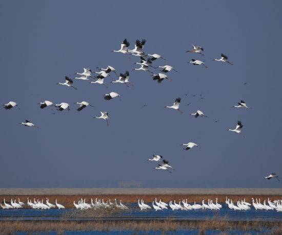 为鸟类等珍稀野生动物提供了良好的栖息繁衍环境和