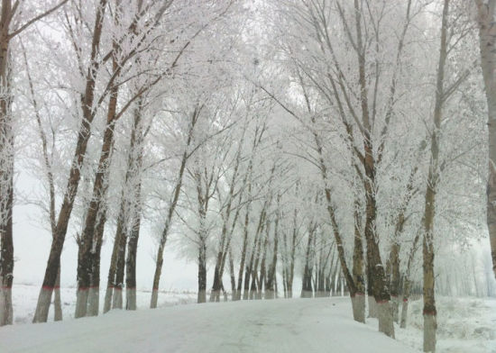 路边挂满雾凇的树