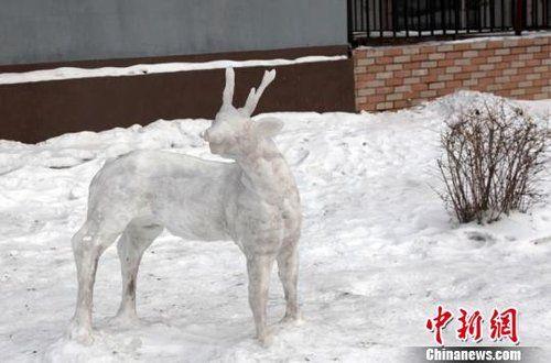 雪雕动物小白兔