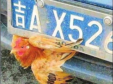高速上现鸡坚强
