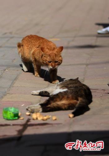 长春市绿园区春郊路与建阳胡同交会处,这只猫一直守在被撞死的怀孕母猫身边,好心人把食物和水放在它旁边