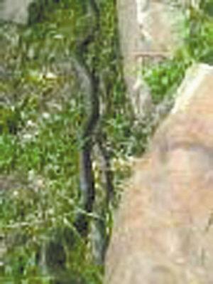 发现蛇的踪迹