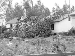 被龙卷风刮倒的大树  边防供图