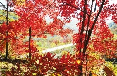 长白山森林旅游节分享展示