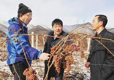 这是他们顶风踏雪在葡萄基地现场与北京专家们分析解决冰葡萄的生长环境问题。