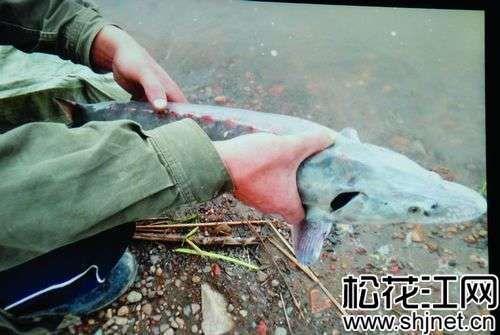 舒兰村民捞起7斤重无鳞怪鱼