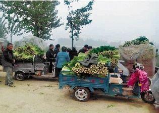 郑州一待用快餐店购买两万斤 今天10点向市民免费发芹菜