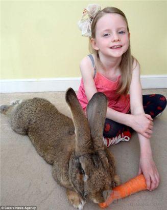 兔子能不能吃胡萝卜