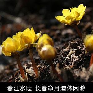 净月潭春天