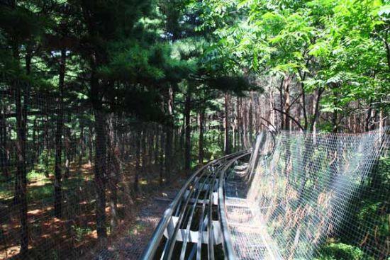 森林公园里,有一个游乐设施正是速度与激情相结合的产物,它就是索滑道